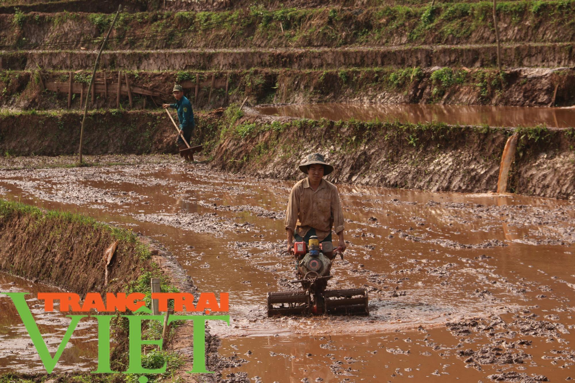 Yên Châu: Ứng dụng khoa học - kỹ thuật vào sản xuất nông nghiệp - Ảnh 1.