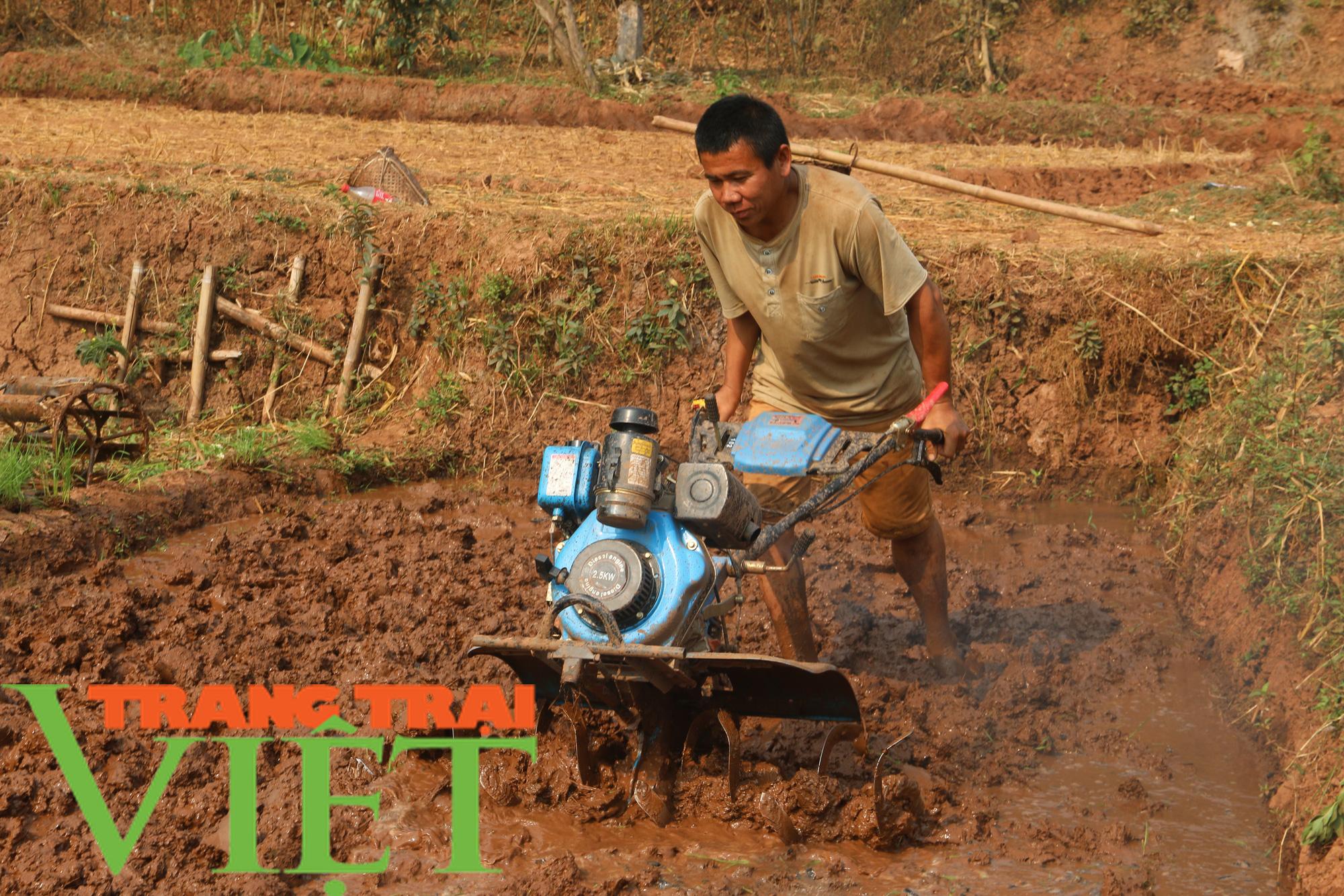 Yên Châu: Ứng dụng khoa học - kỹ thuật vào sản xuất nông nghiệp - Ảnh 4.