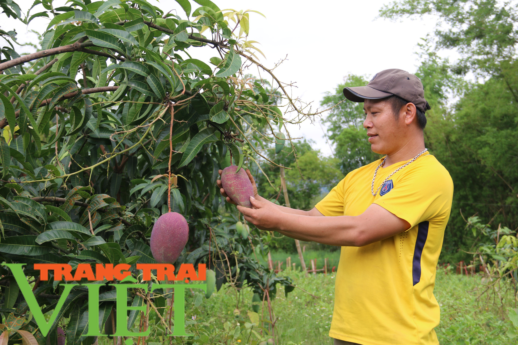 Yên Châu: Ứng dụng khoa học - kỹ thuật vào sản xuất nông nghiệp - Ảnh 5.