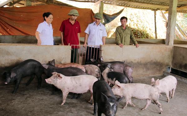 Dịch tả lợn châu Phi rình rập tái phát diện rộng - Ảnh 1.