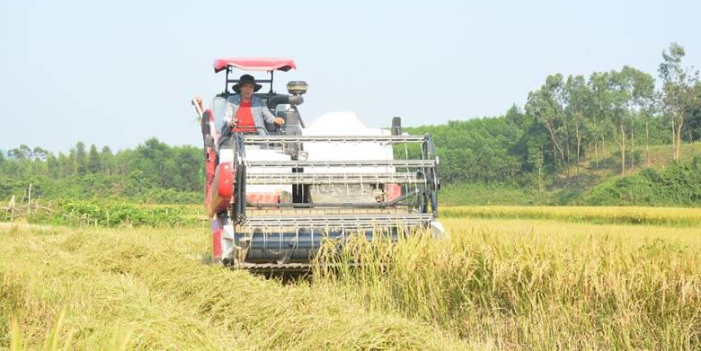 Xu hướng mua máy gặt mới để thu hoạch lúa vụ mùa đông – xuân của nông dân miền Bắc - Ảnh 1.