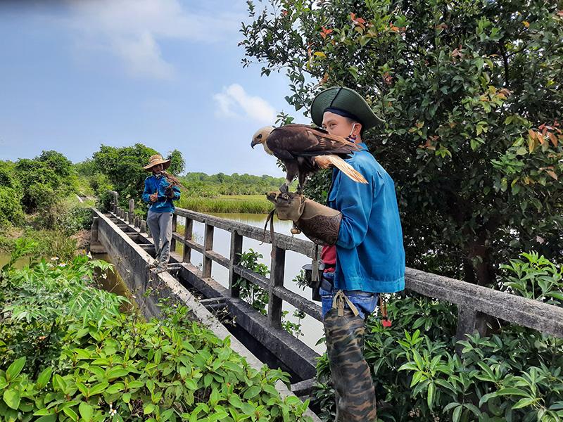 Thú chơi chim săn mồi, đem chim đuổi chuột đồng ở Quảng Trị - Ảnh 2.