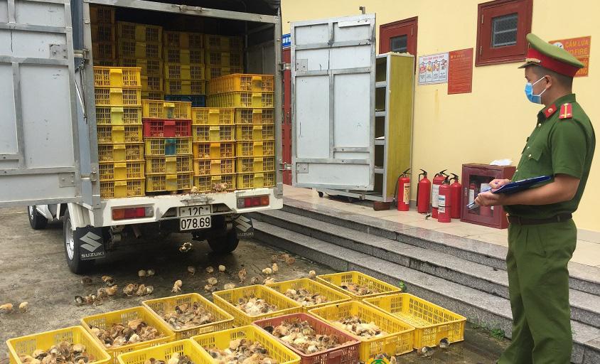Lạng Sơn: Bắt vụ vận chuyển hơn 6.500 con gà giống nhập lậu - Ảnh 1.
