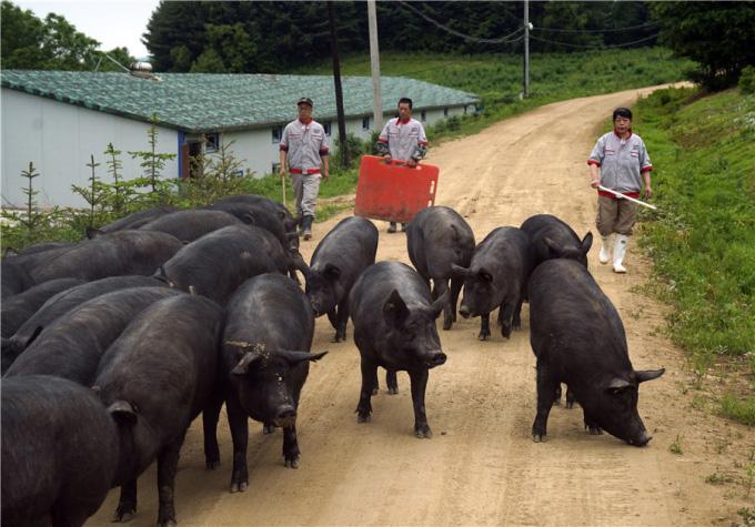 """Tỷ phú thịt lợn Trung Quốc: """"Còn lâu giá lợn hơi mới giảm"""" - Ảnh 2."""