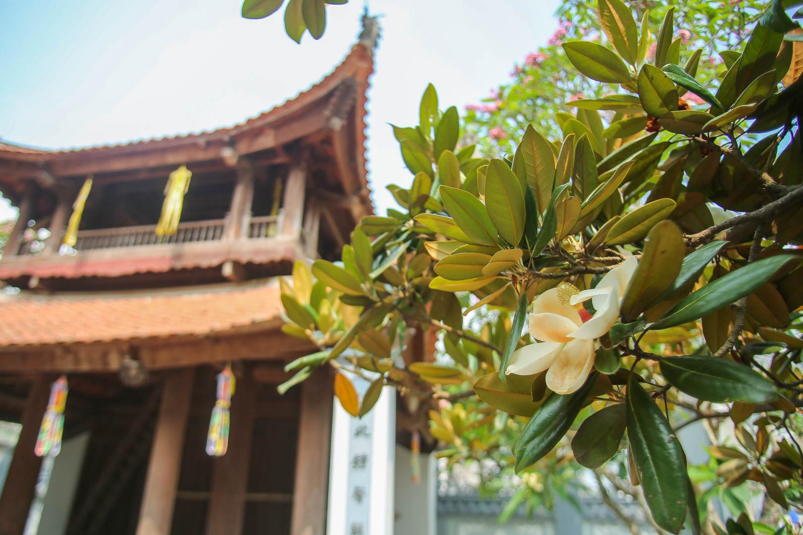 Kỳ lạ đóa sen nằm trên cạn, tỏa hương thơm ngát ngôi chùa trăm năm tuổi - Ảnh 5.