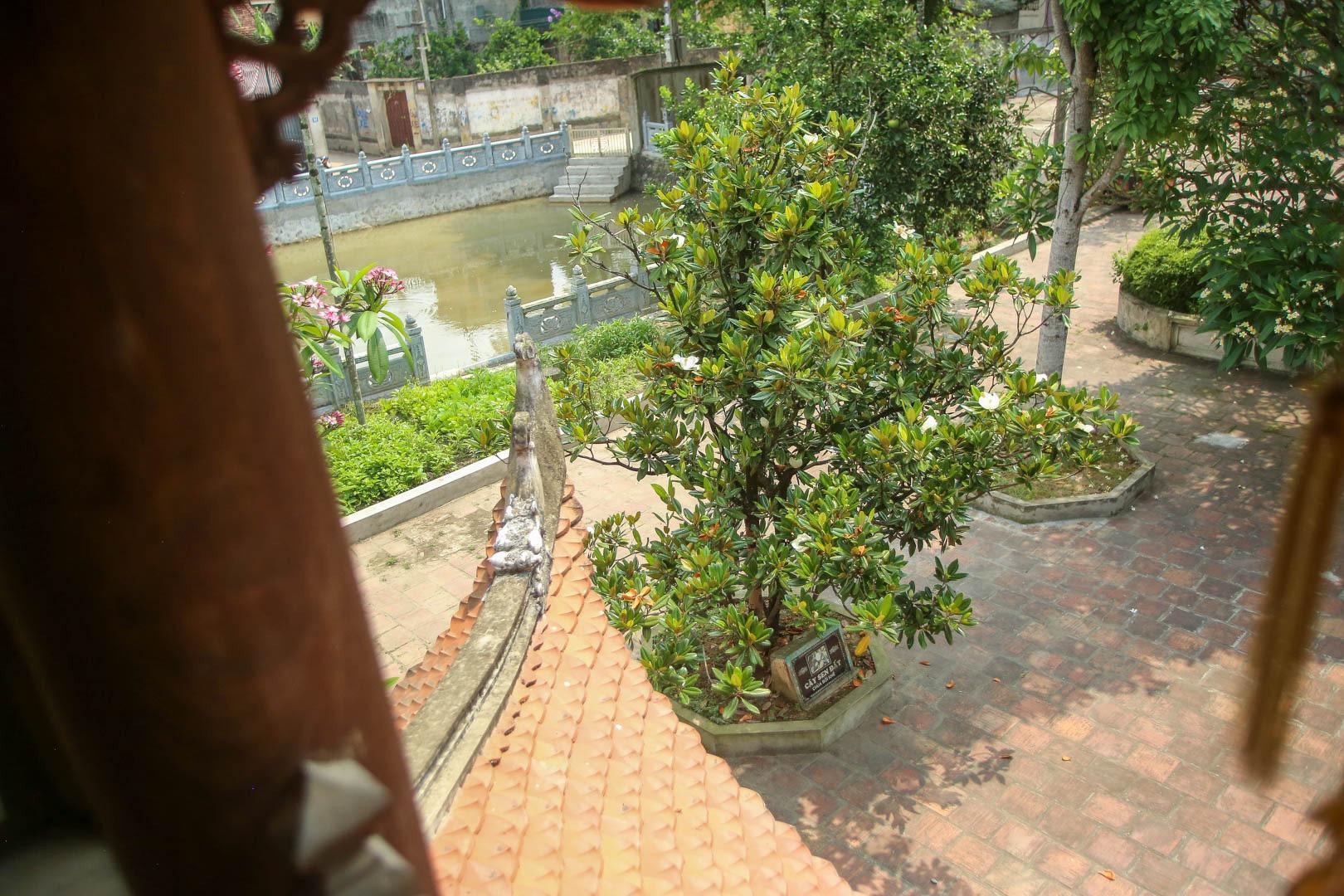 Kỳ lạ đóa sen nằm trên cạn, tỏa hương thơm ngát ngôi chùa trăm năm tuổi - Ảnh 11.