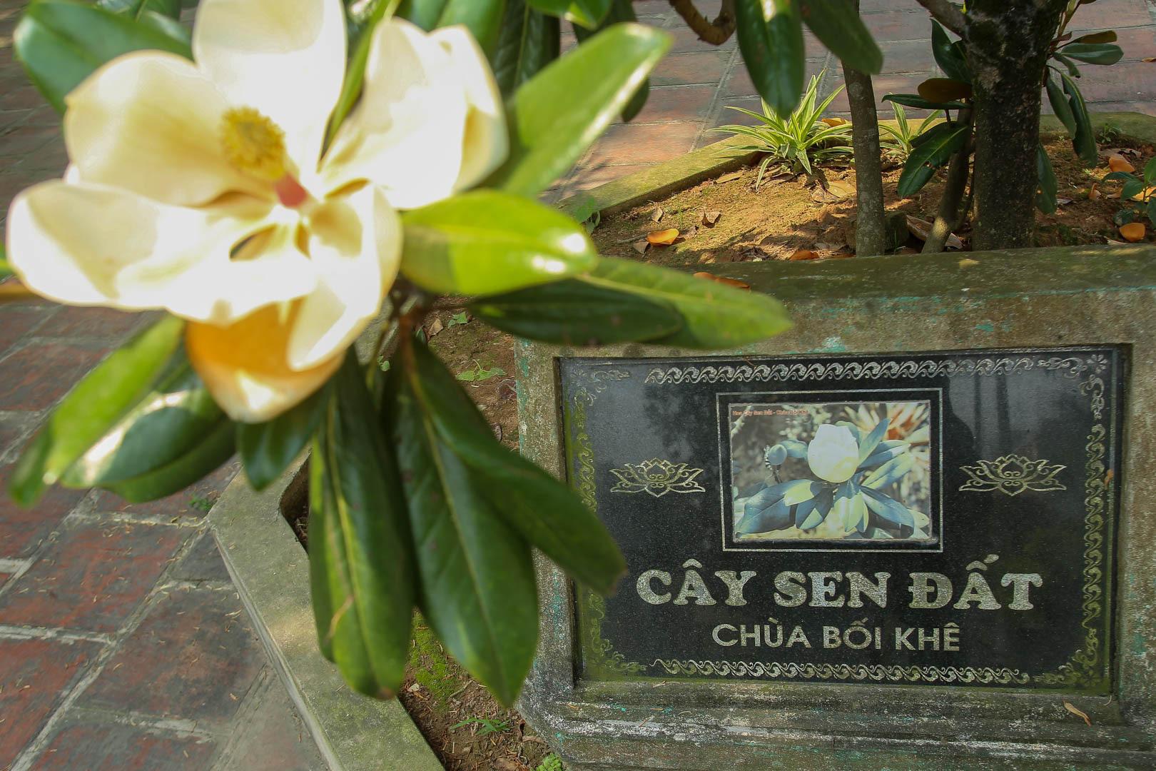 Kỳ lạ đóa sen nằm trên cạn, tỏa hương thơm ngát ngôi chùa trăm năm tuổi - Ảnh 13.