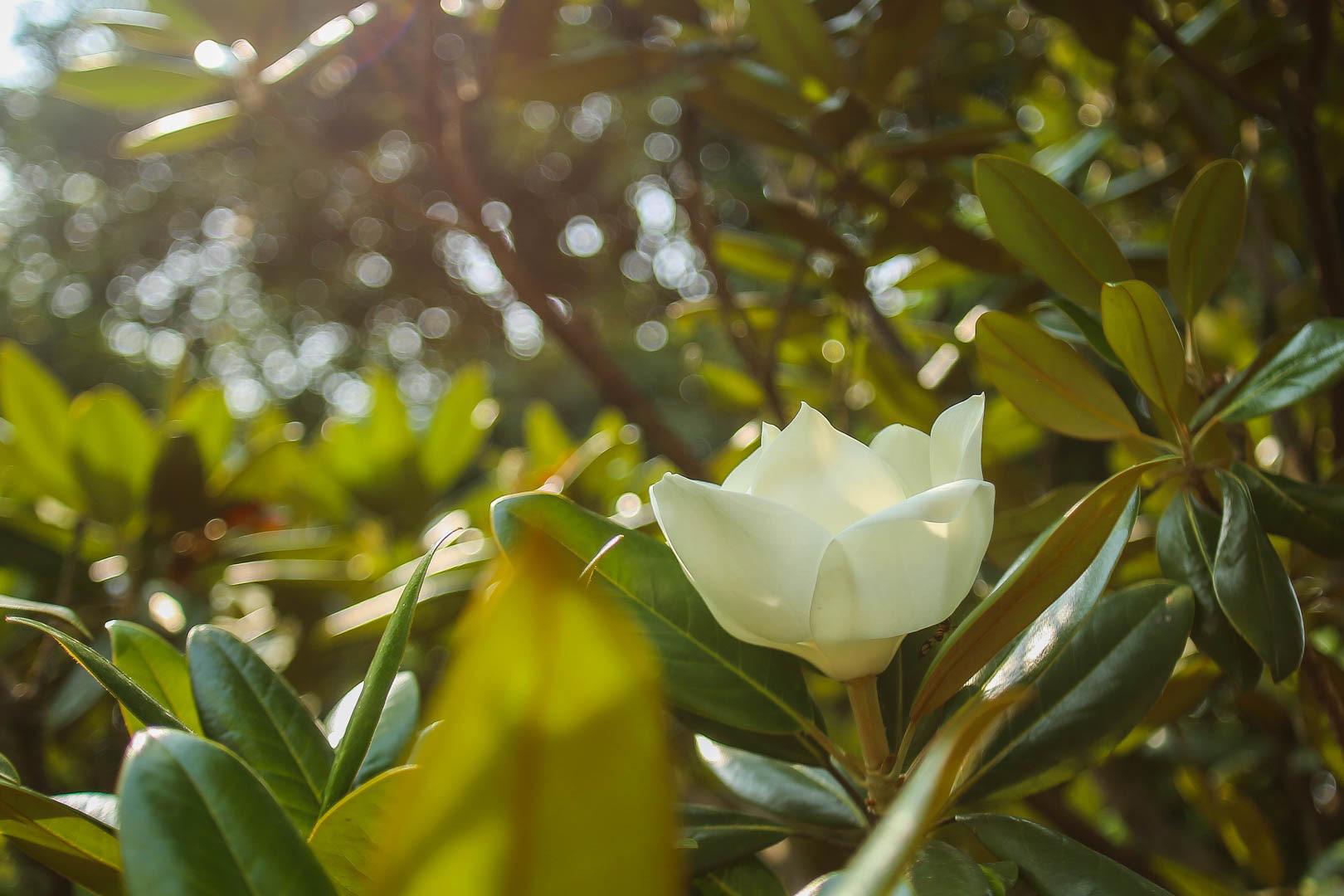 Kỳ lạ đóa sen nằm trên cạn, tỏa hương thơm ngát ngôi chùa trăm năm tuổi - Ảnh 12.
