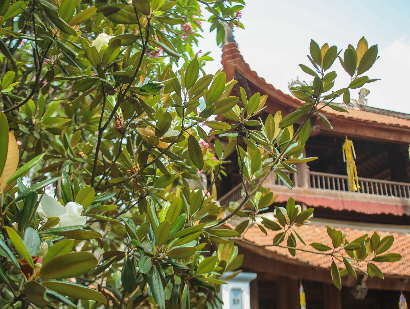 Kỳ lạ đóa sen nằm trên cạn, tỏa hương thơm ngát ngôi chùa trăm năm tuổi - Ảnh 2.