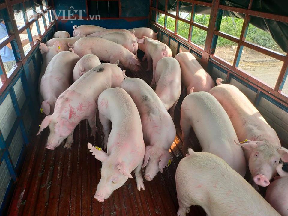 Nóng: Lần đầu tiên Bộ NN&PTNT cho nhập khẩu lợn sống - Ảnh 1.