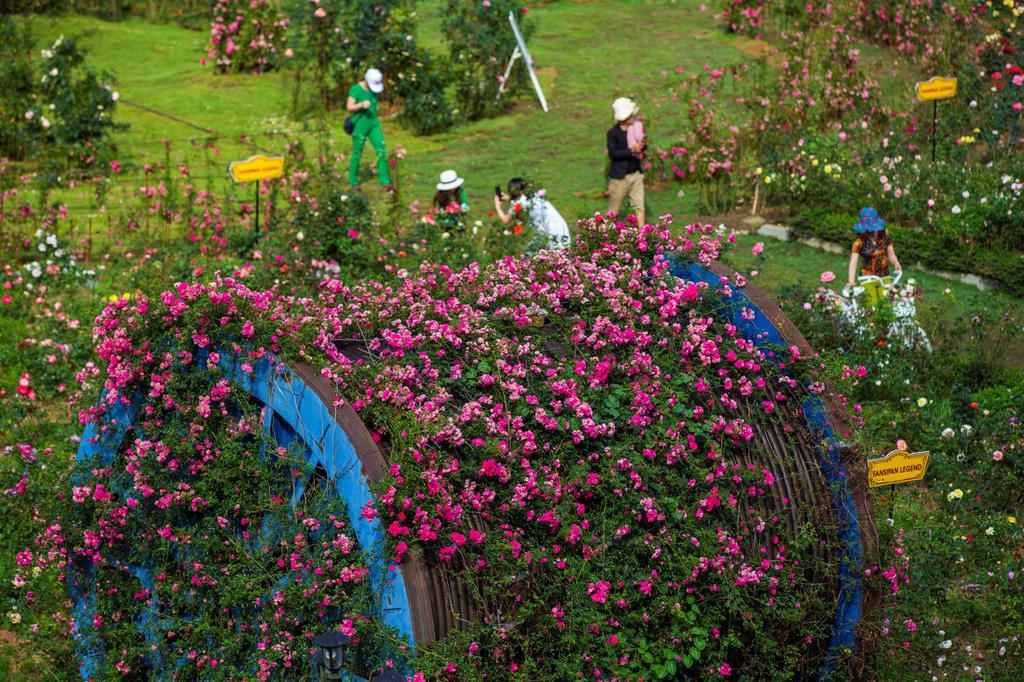 Lạc giữa thung lũng hoa lớn nhất Việt Nam ở Sa Pa - Ảnh 2.