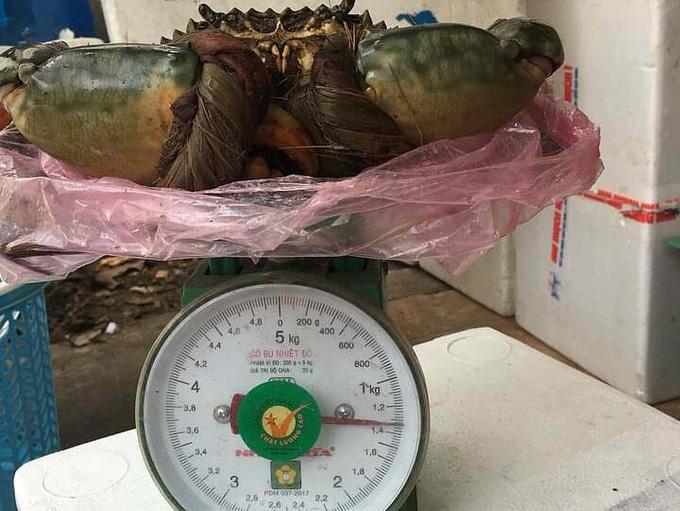 Triệu đồng một con cua biển 'khổng lồ' - Ảnh 1.