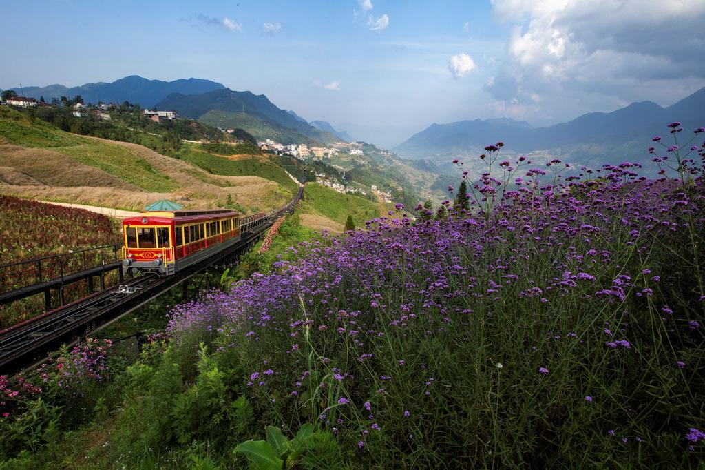 Lạc giữa thung lũng hoa lớn nhất Việt Nam ở Sa Pa - Ảnh 1.