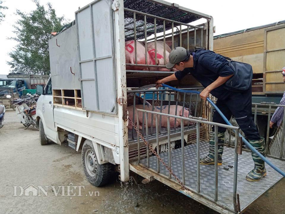 Chợ đầu mối lợn lớn nhất phía Bắc: cảnh mua bán tấp nập, giá lợn hơi tại chợ giảm từ 2.000 đồng - 4.000 đồng/kg - Ảnh 7.