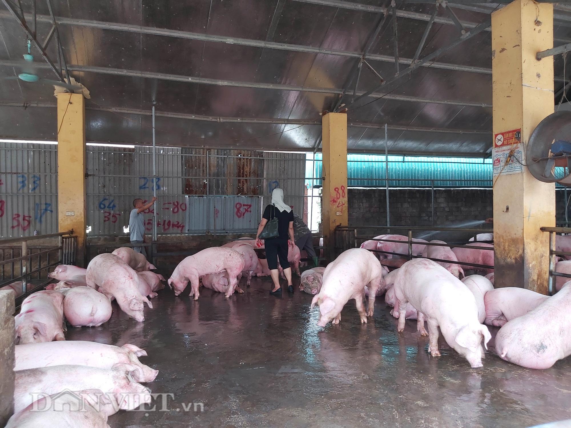 Chợ đầu mối lợn lớn nhất phía Bắc: cảnh mua bán tấp nập, giá lợn hơi tại chợ giảm từ 2.000 đồng - 4.000 đồng/kg - Ảnh 6.
