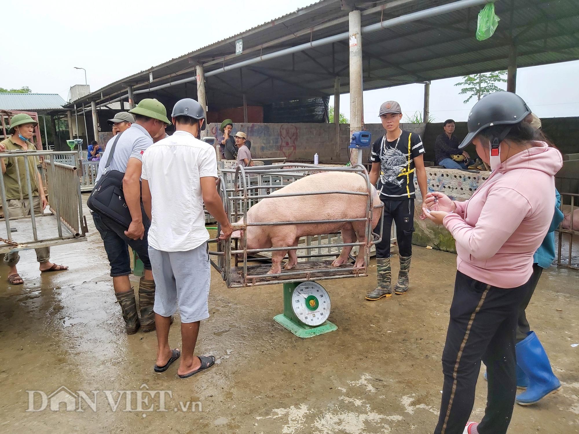 Chợ đầu mối lợn lớn nhất phía Bắc: cảnh mua bán tấp nập, giá lợn hơi tại chợ giảm từ 2.000 đồng - 4.000 đồng/kg - Ảnh 2.