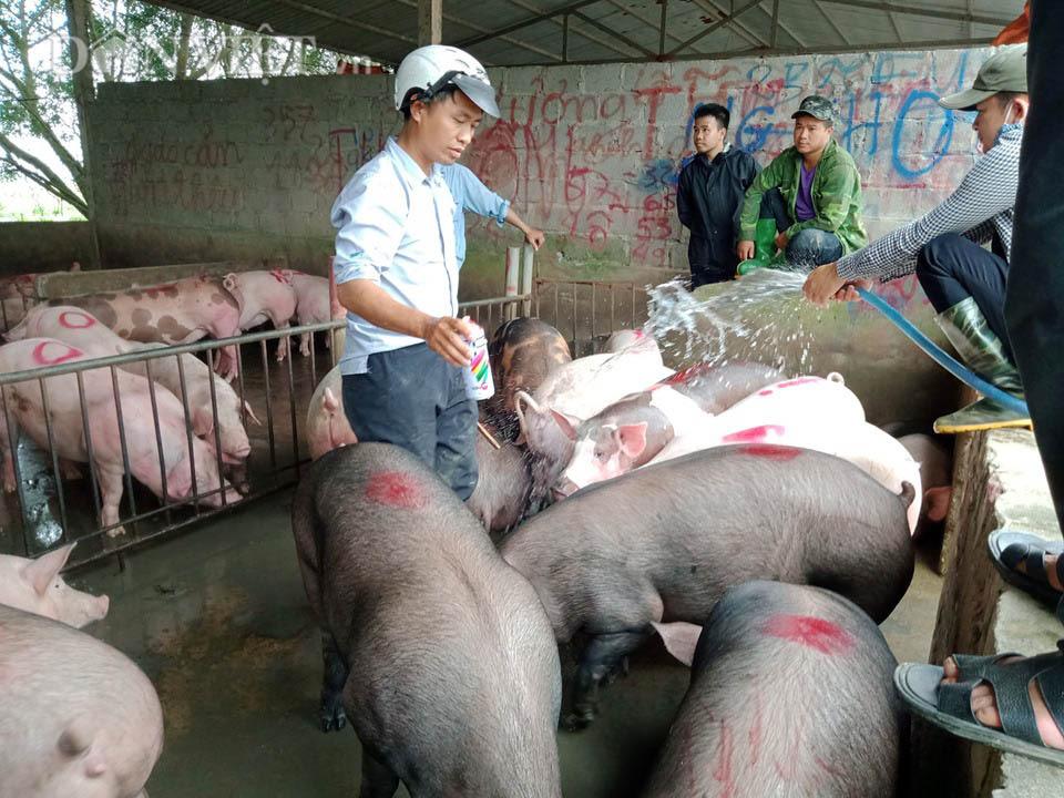 Chợ đầu mối lợn lớn nhất phía Bắc: cảnh mua bán tấp nập, giá lợn hơi tại chợ giảm từ 2.000 đồng - 4.000 đồng/kg - Ảnh 3.