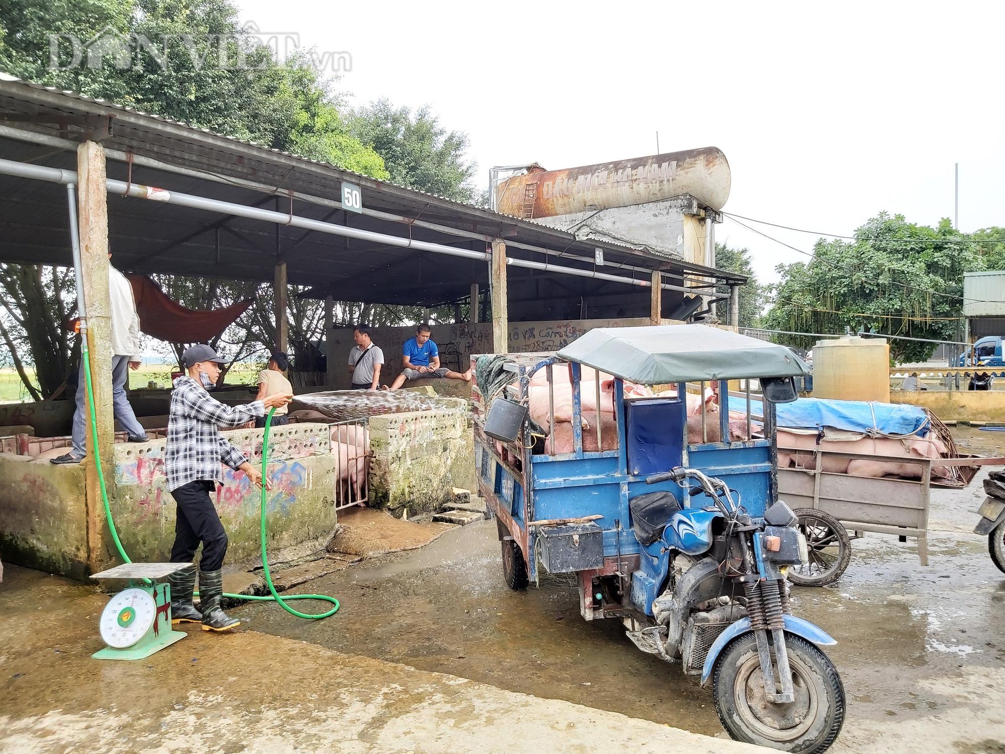 Chợ đầu mối lợn lớn nhất phía Bắc: cảnh mua bán tấp nập, giá lợn hơi tại chợ giảm từ 2.000 đồng - 4.000 đồng/kg - Ảnh 4.