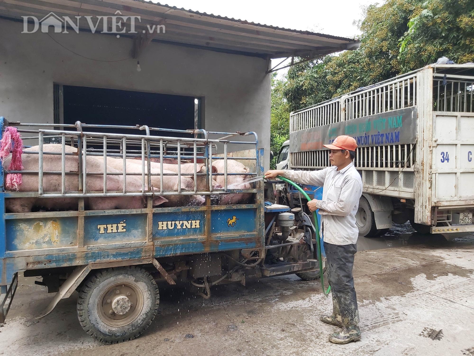 Chợ đầu mối lợn lớn nhất phía Bắc: cảnh mua bán tấp nập, giá lợn hơi tại chợ giảm từ 2.000 đồng - 4.000 đồng/kg - Ảnh 8.