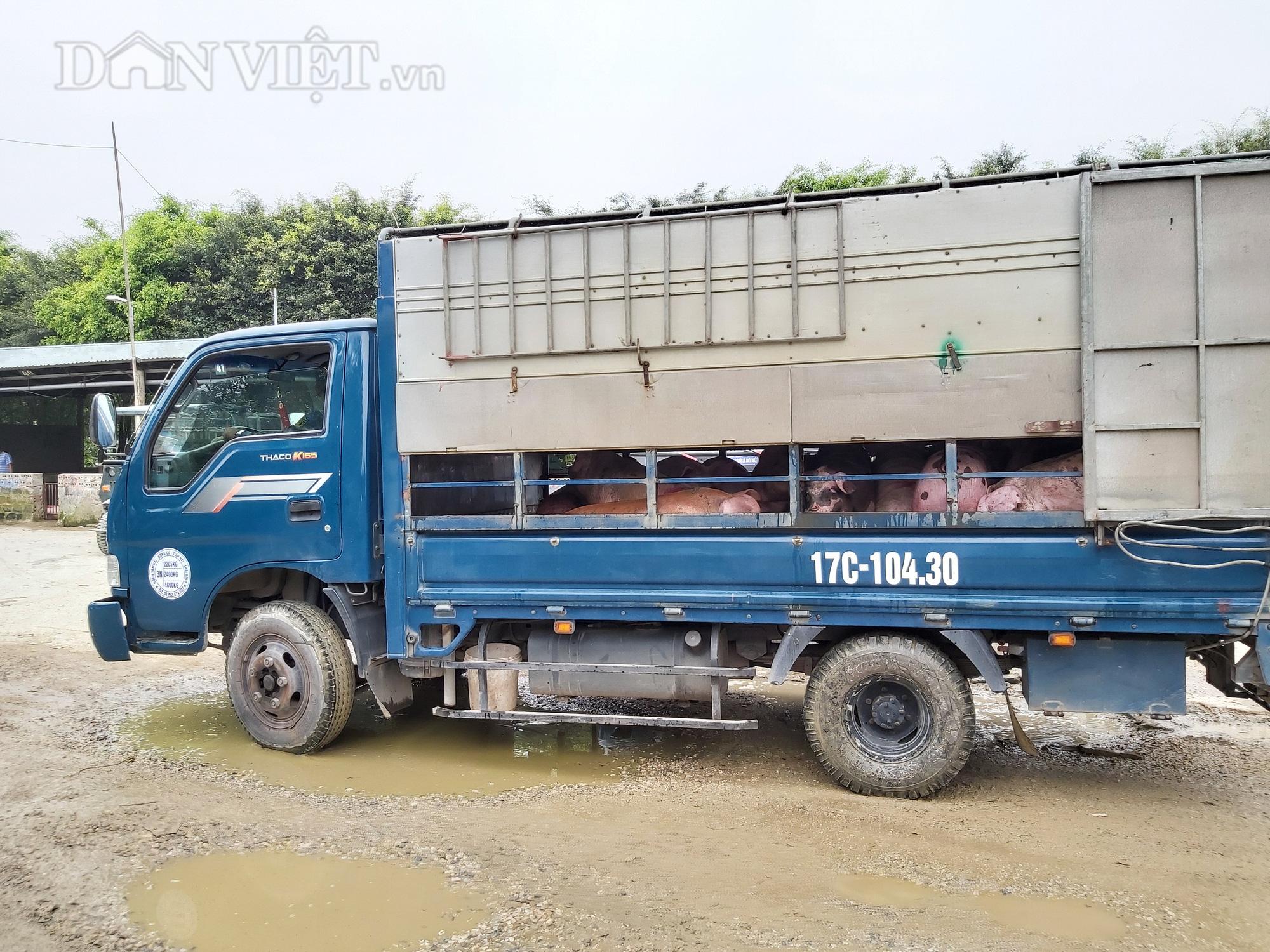 Chợ đầu mối lợn lớn nhất phía Bắc: cảnh mua bán tấp nập, giá lợn hơi tại chợ giảm từ 2.000 đồng - 4.000 đồng/kg - Ảnh 5.