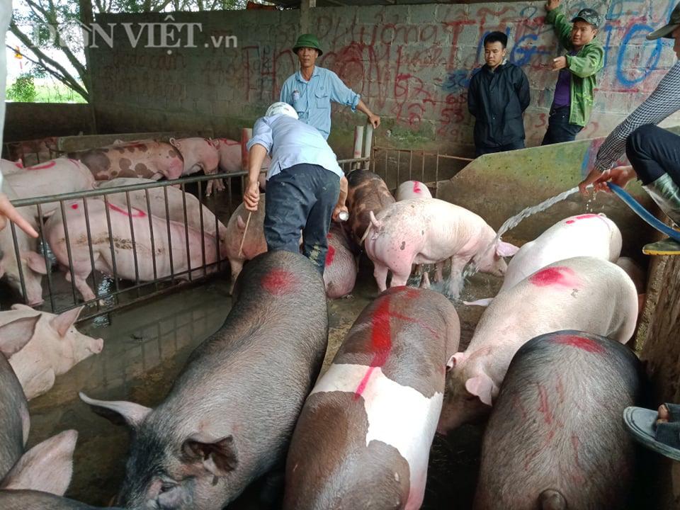 Chợ đầu mối lợn lớn nhất phía Bắc: cảnh mua bán tấp nập, giá lợn hơi tại chợ giảm từ 2.000 đồng - 4.000 đồng/kg - Ảnh 9.