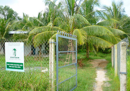 """Làm giàu khác người: Trồng dừa chưa kịp ra trái đã """"hái"""" khối tiền ở Trà Vinh - Ảnh 1."""