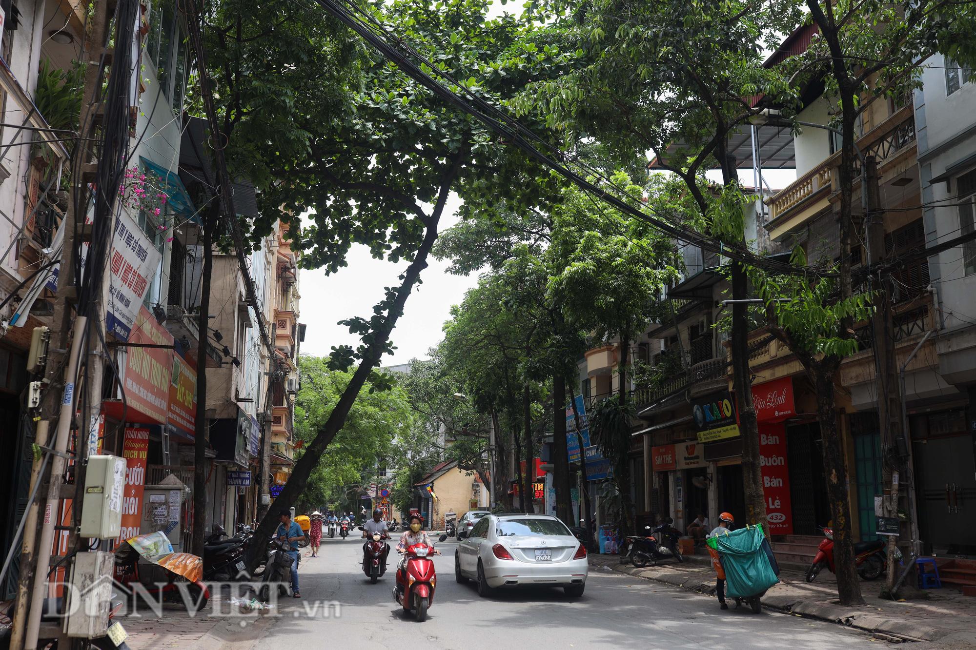 Ẩn hoạ đến từ những cây xanh chết khô trên đường phố Hà Nội - Ảnh 15.