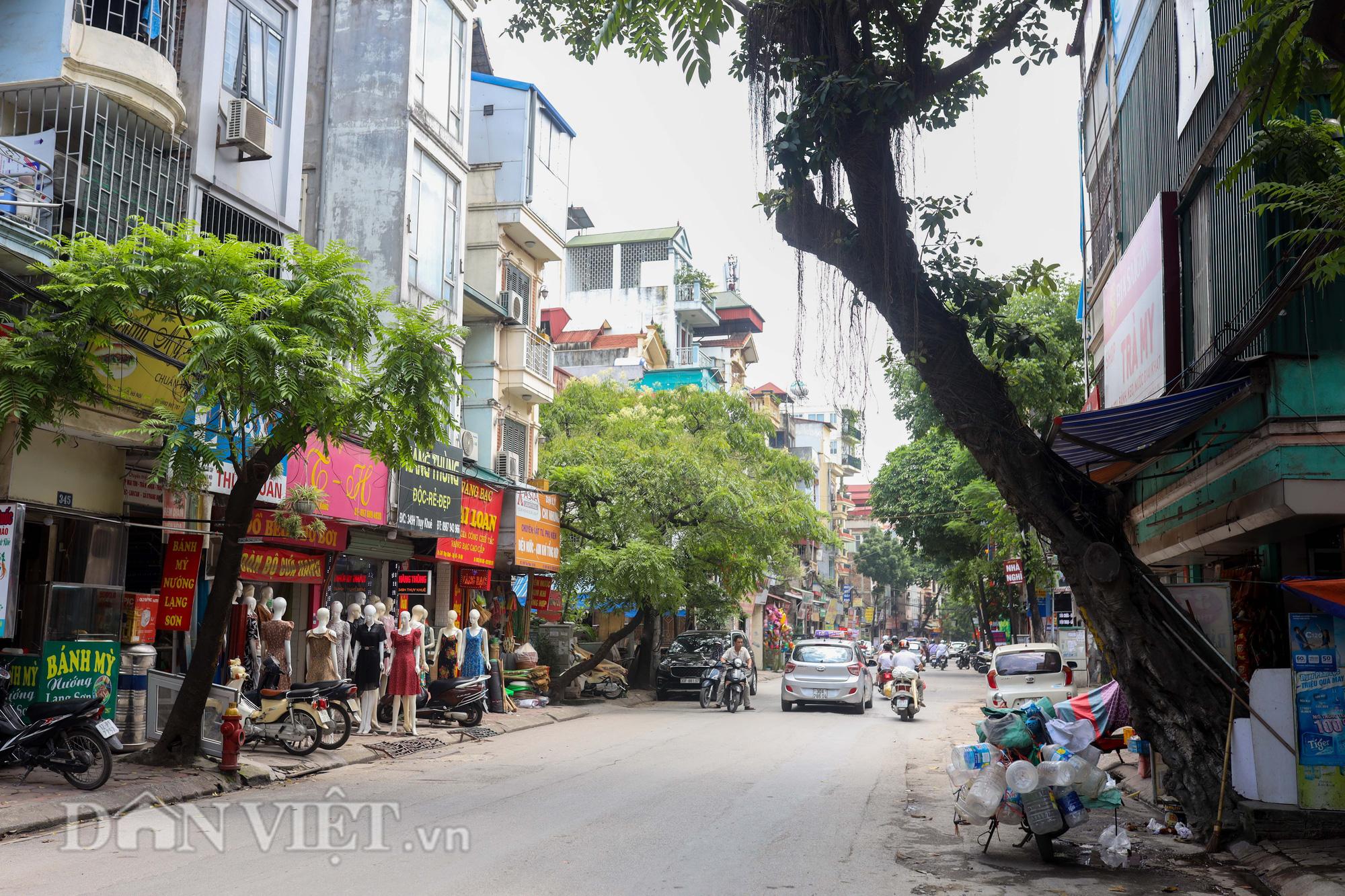 Ẩn hoạ đến từ những cây xanh chết khô trên đường phố Hà Nội - Ảnh 13.