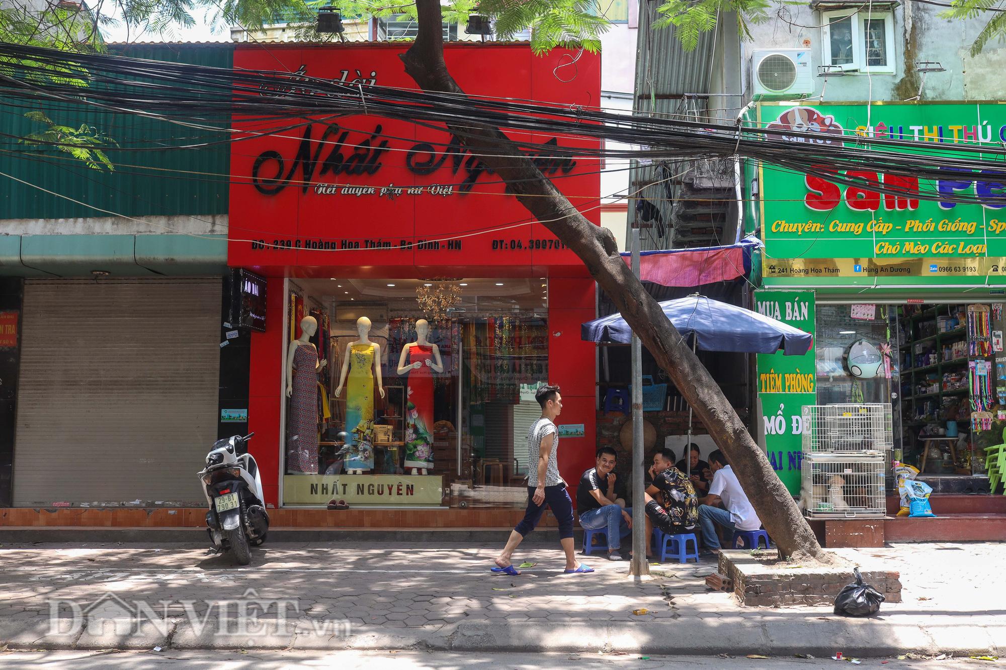 Ẩn hoạ đến từ những cây xanh chết khô trên đường phố Hà Nội - Ảnh 11.