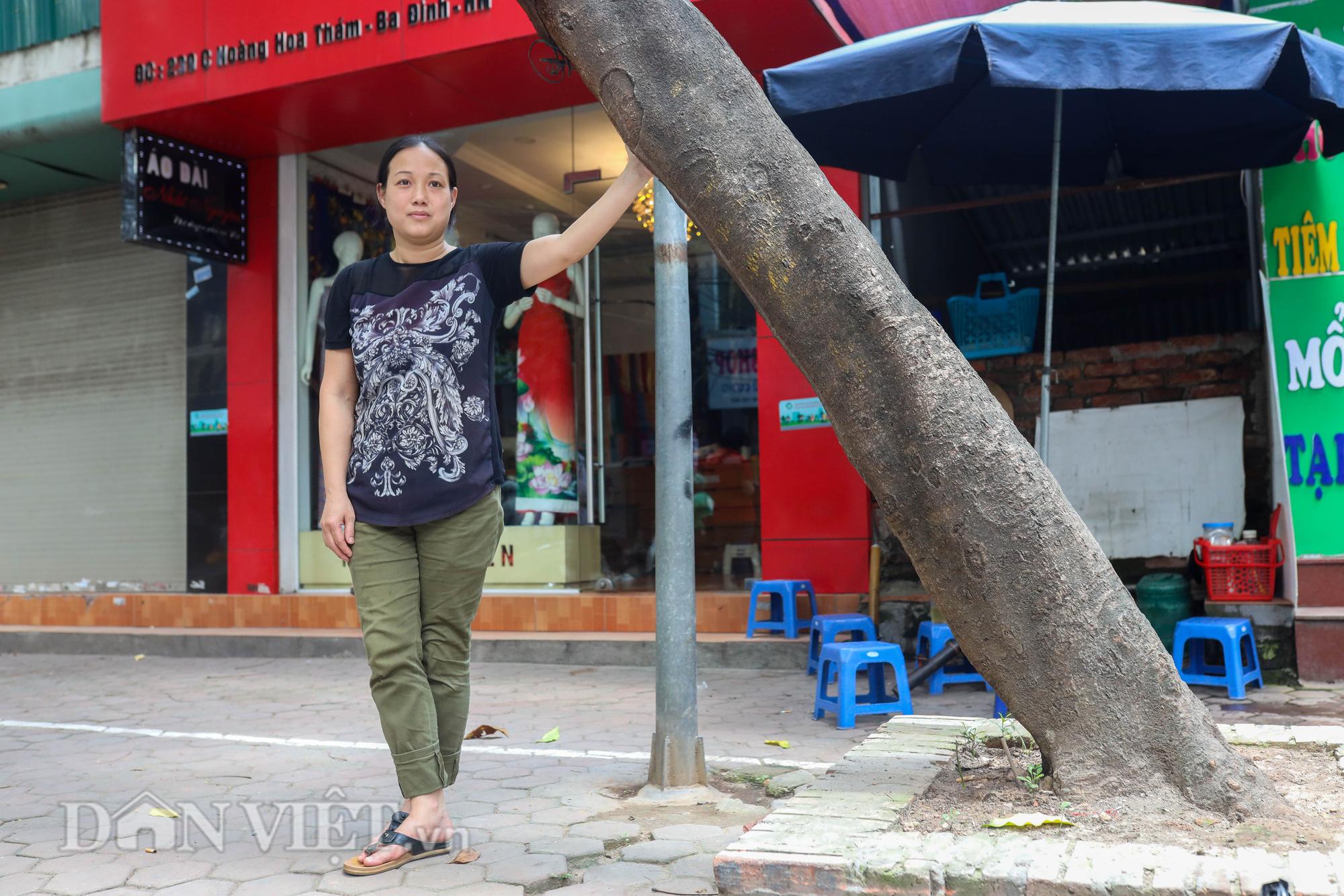 Ẩn hoạ đến từ những cây xanh chết khô trên đường phố Hà Nội - Ảnh 12.