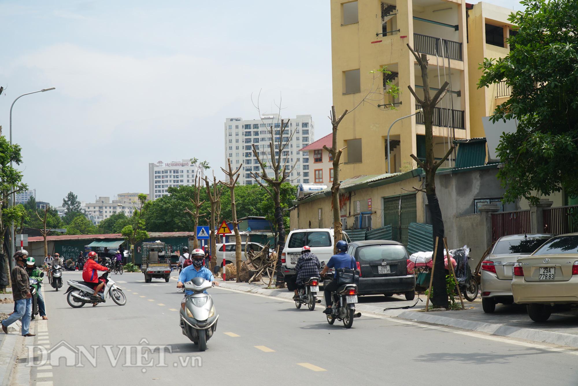 Ẩn hoạ đến từ những cây xanh chết khô trên đường phố Hà Nội - Ảnh 1.