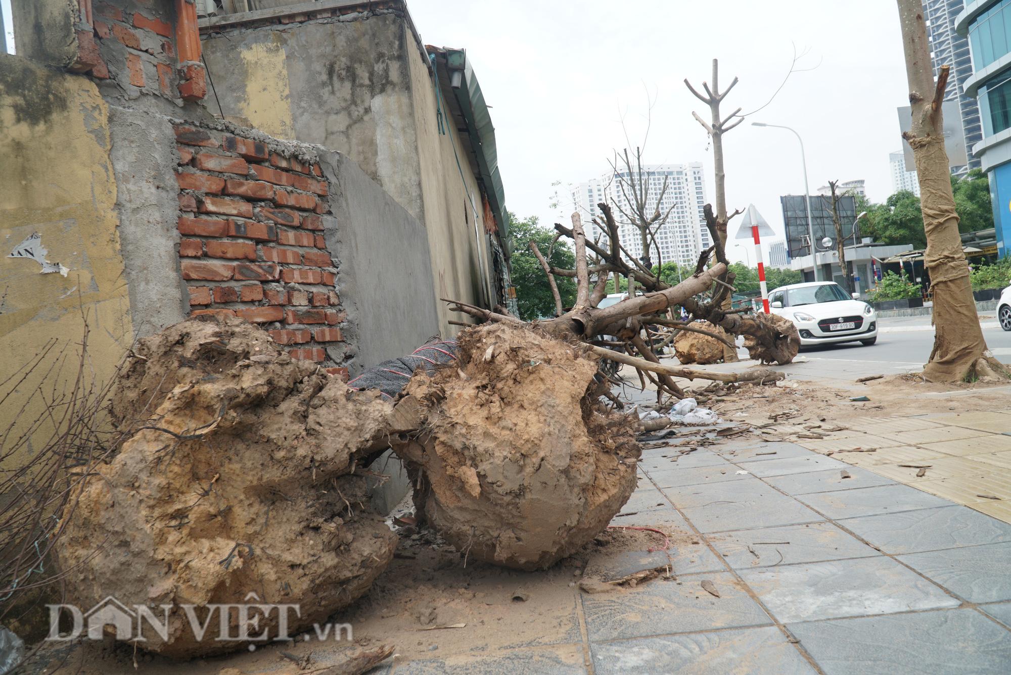 Ẩn hoạ đến từ những cây xanh chết khô trên đường phố Hà Nội - Ảnh 7.