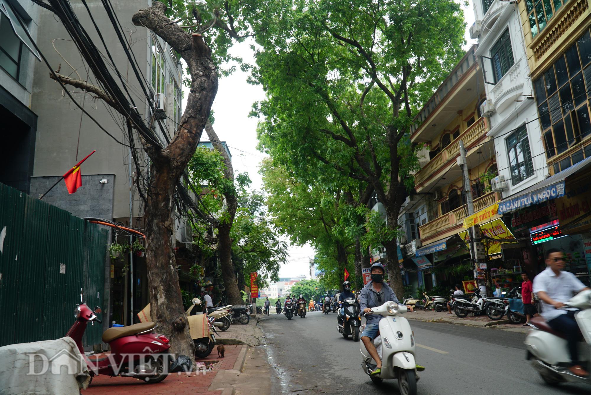 Ẩn hoạ đến từ những cây xanh chết khô trên đường phố Hà Nội - Ảnh 8.
