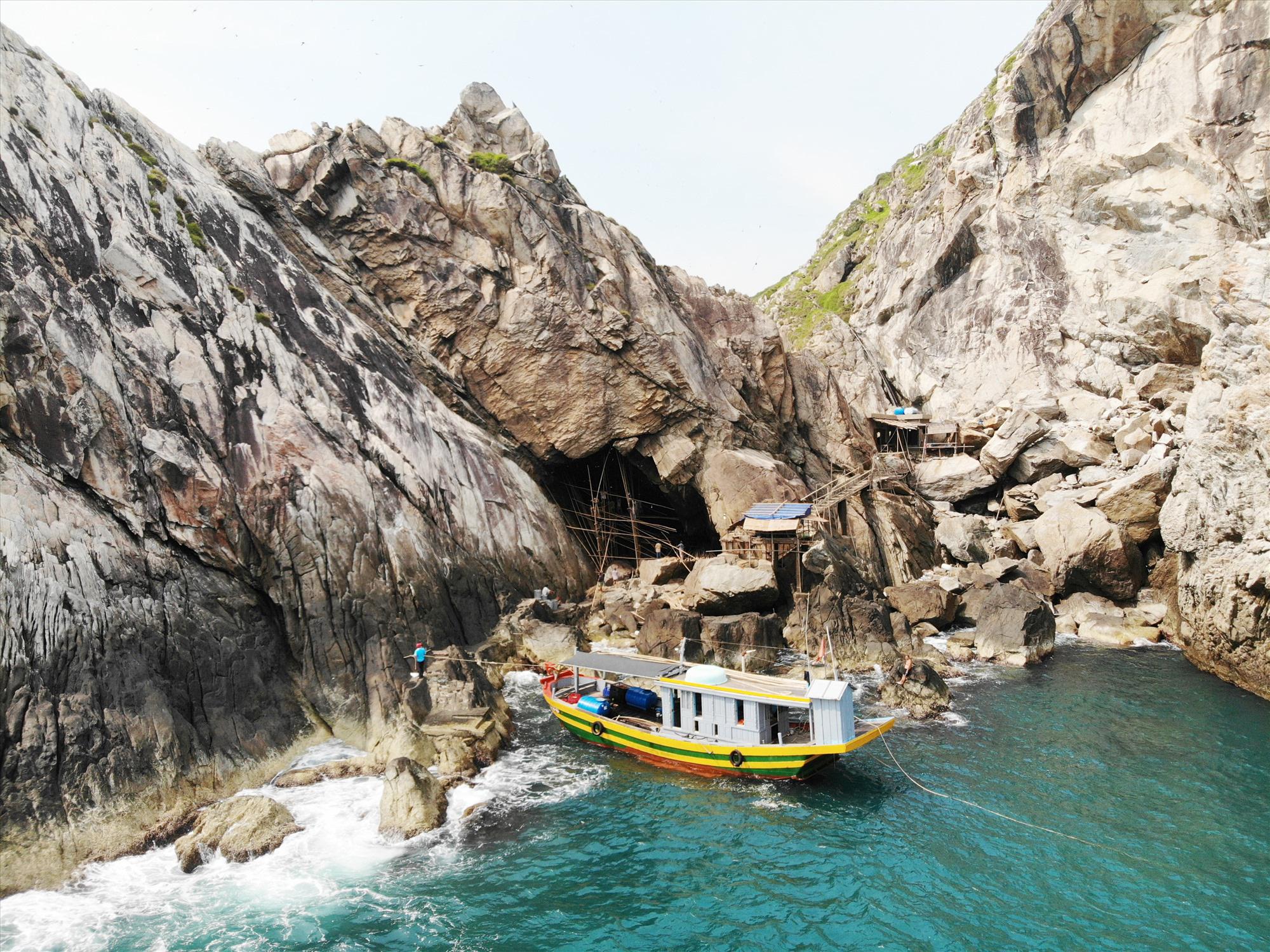 Quảng Nam: Sống đời cheo leo vách núi chăm chim tiền tỷ ở biển Cù Lao Chàm - Ảnh 6.