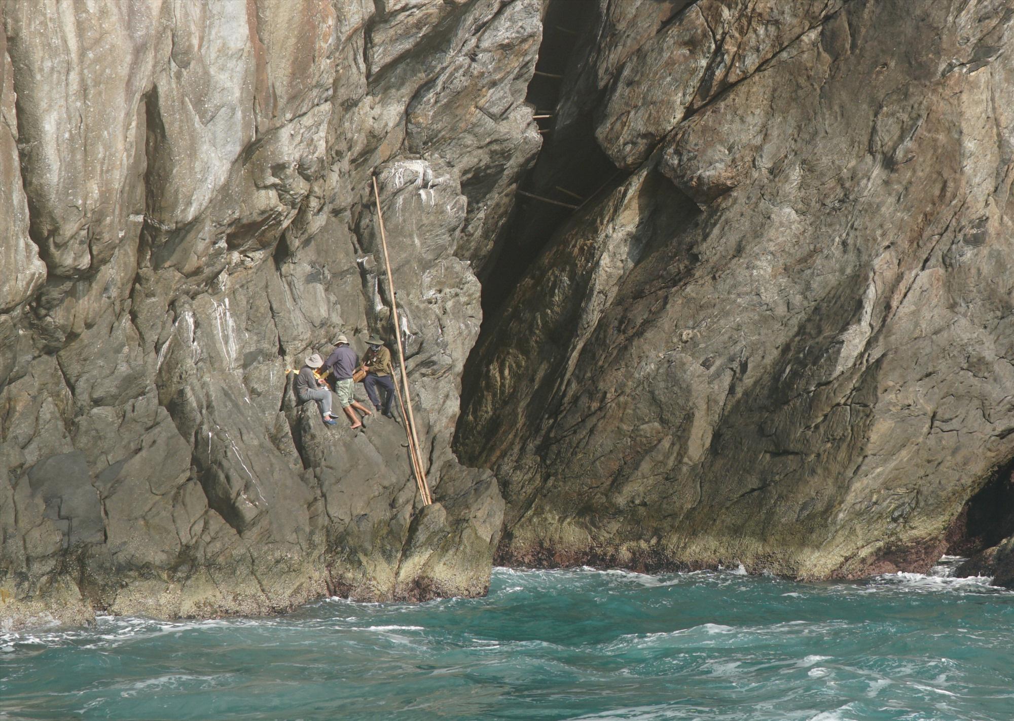Quảng Nam: Sống đời cheo leo vách núi chăm chim tiền tỷ ở biển Cù Lao Chàm - Ảnh 5.
