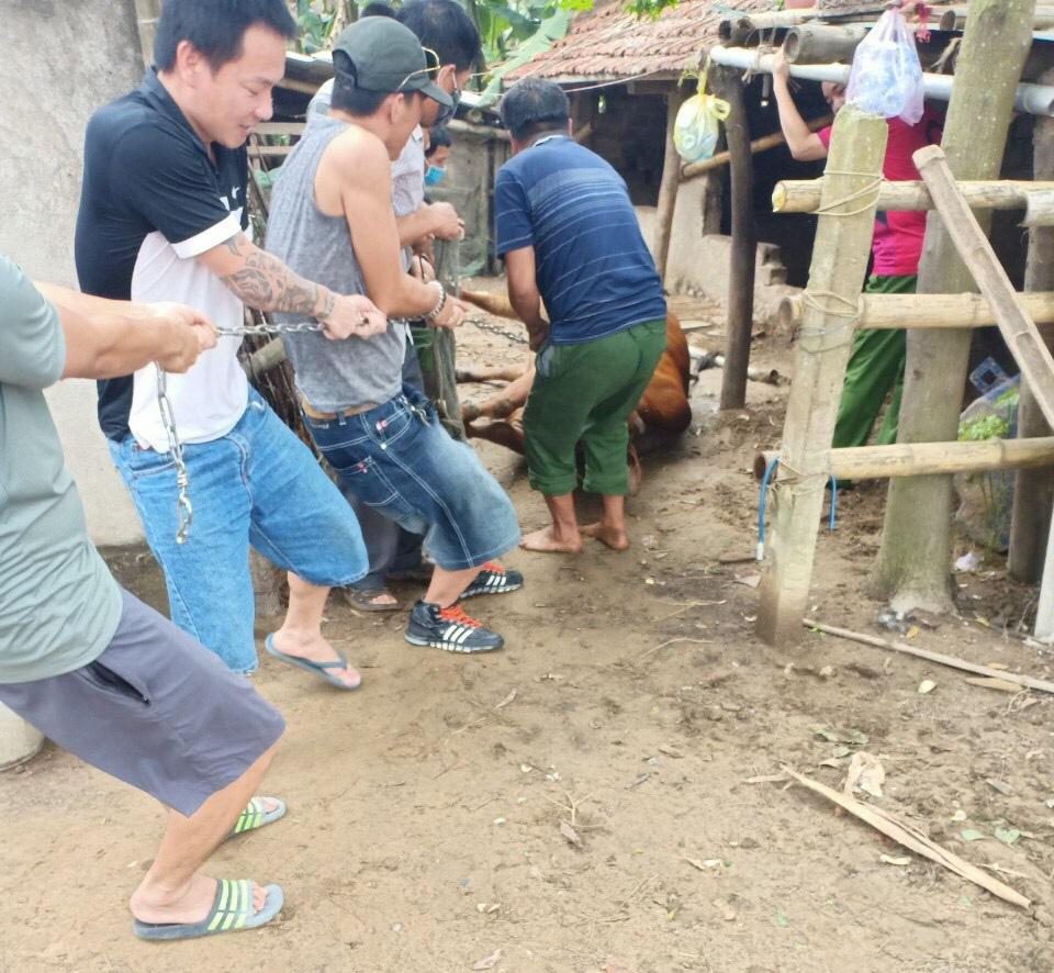 Thanh Hóa: Dân hoang mang, phẫn nộ khi 4 con bò đột nhiên sùi bọt mép lăn ra chết - Ảnh 4.