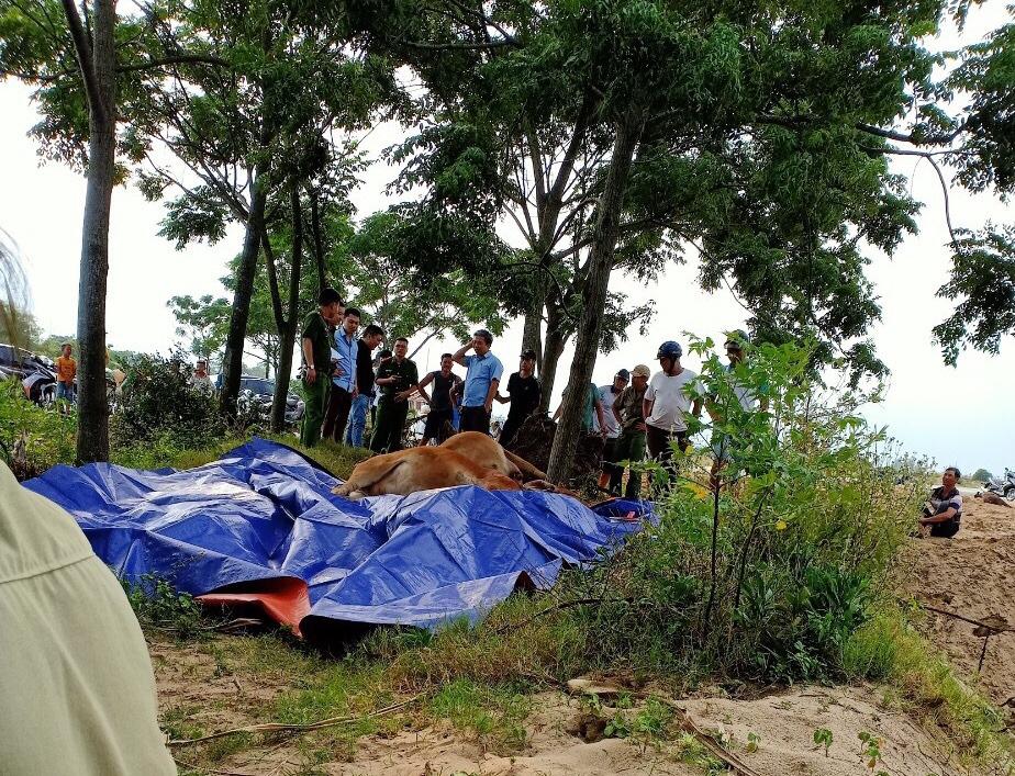 Thanh Hóa: Dân hoang mang, phẫn nộ khi 4 con bò đột nhiên sùi bọt mép lăn ra chết - Ảnh 2.