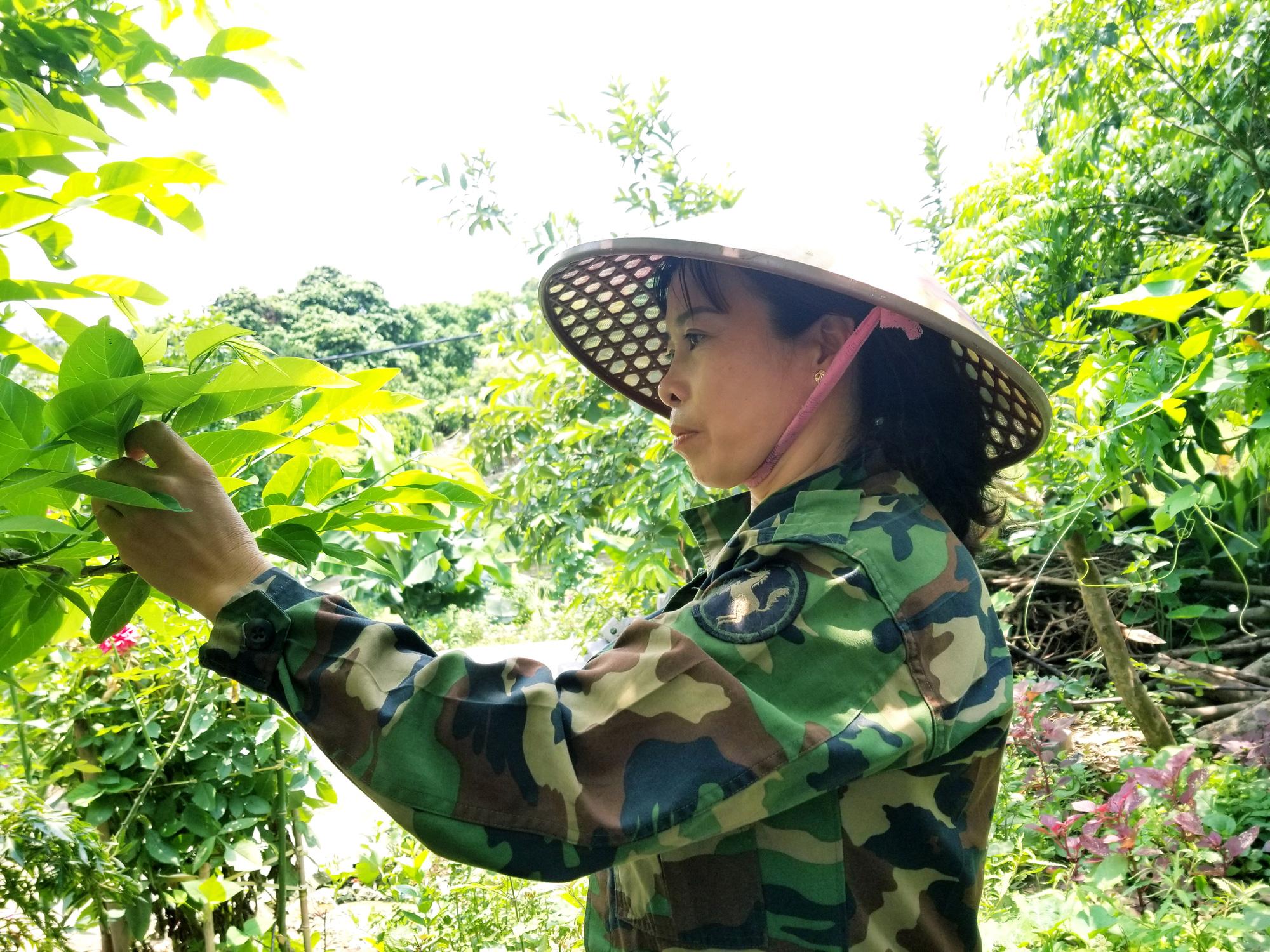 Nhờ cách làm này mà nông dân nơi thủ phủ Na xứ Lạng hái quả mỏi tay - Ảnh 4.