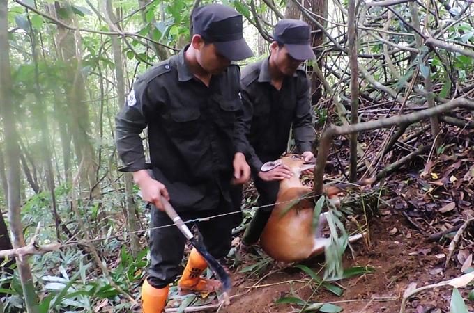 Đội tuần tra tháo bẫy thú rừng - Ảnh 2.