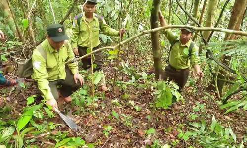 Đội tuần tra tháo bẫy thú rừng - Ảnh 5.