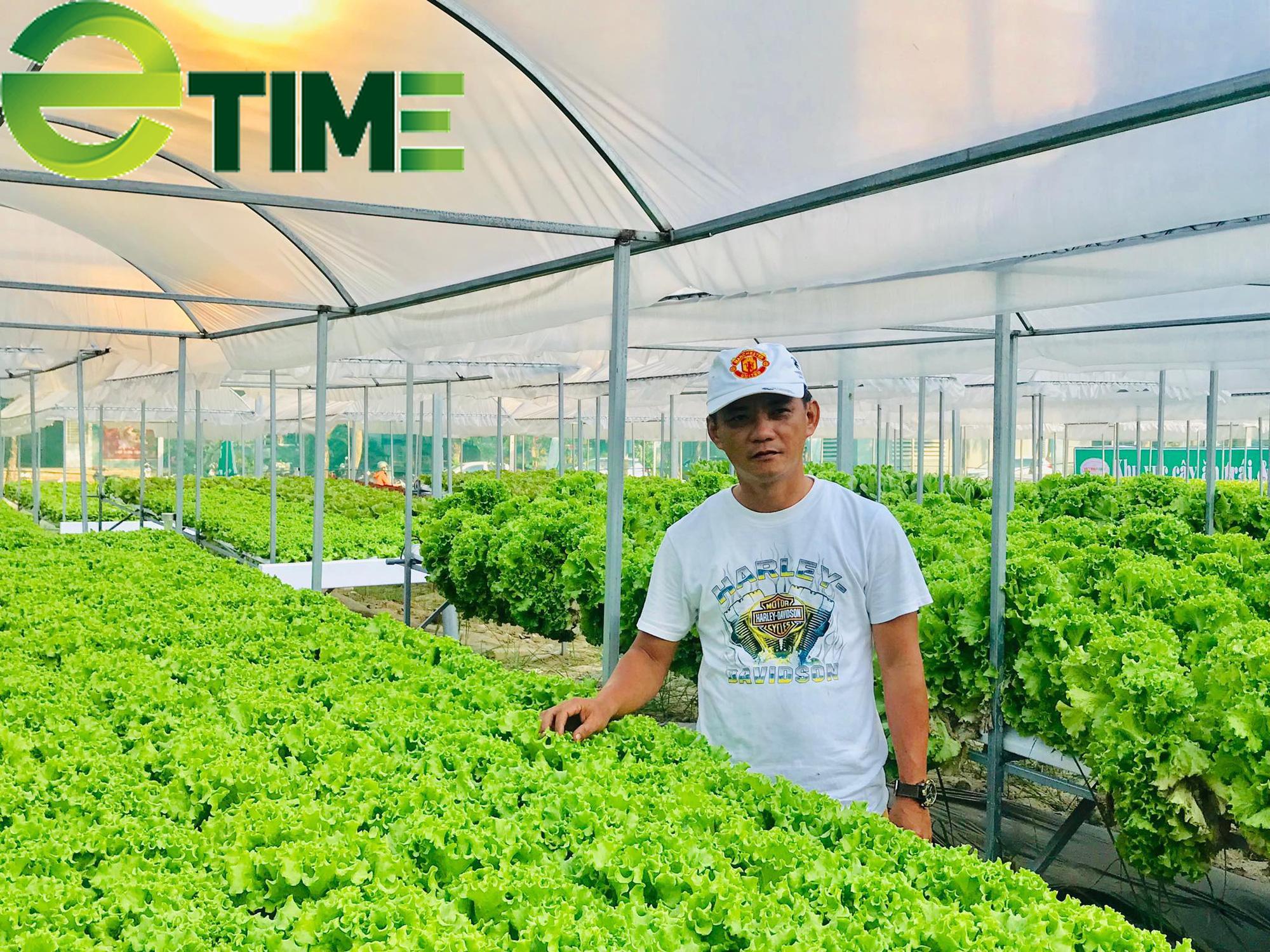 Đà Nẵng: 7X thuê đất để khởi nghiệp từ rau thủy canh, thu 2 triệu đồng/ngày - Ảnh 4.