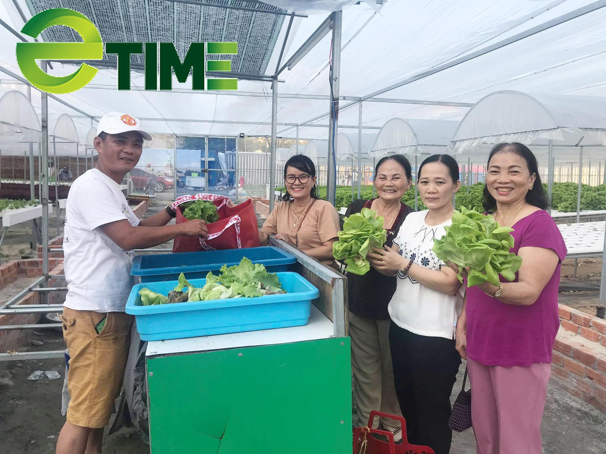 Đà Nẵng: 7X thuê đất để khởi nghiệp từ rau thủy canh, thu 2 triệu đồng/ngày - Ảnh 1.