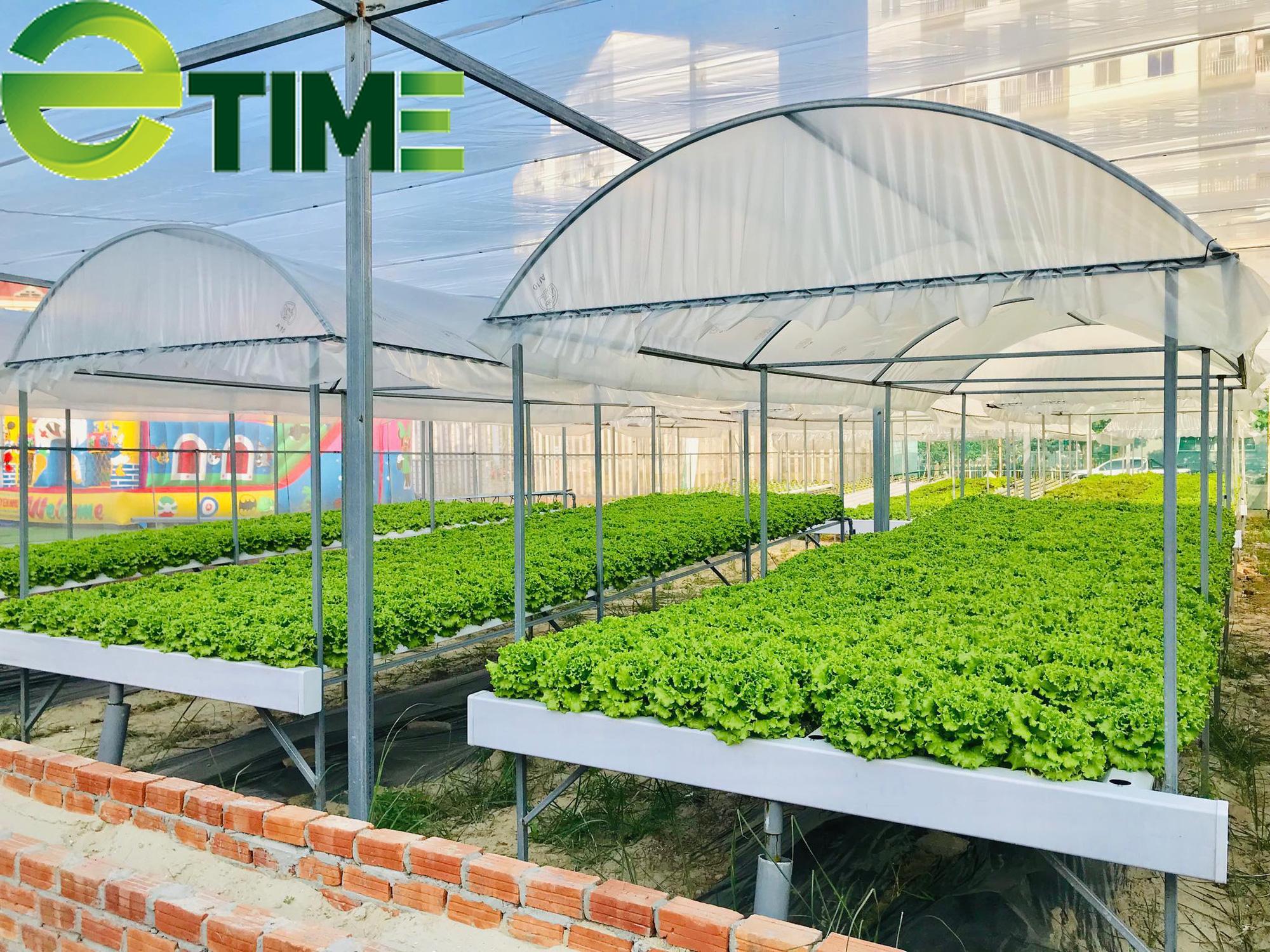 Đà Nẵng: 7X thuê đất để khởi nghiệp từ rau thủy canh, thu 2 triệu đồng/ngày - Ảnh 5.