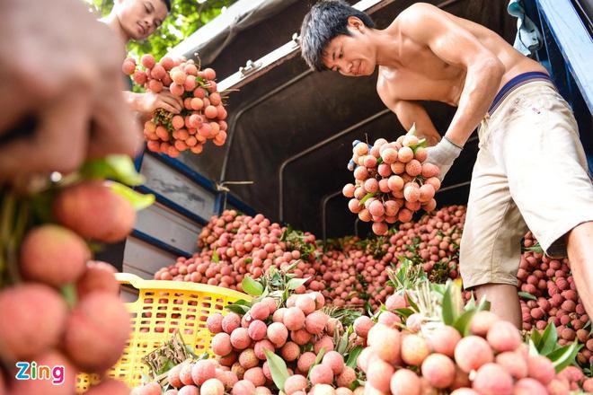 Chuyên gia Nhật sang Việt Nam giám sát xuất khẩu vải thiều - Ảnh 1.