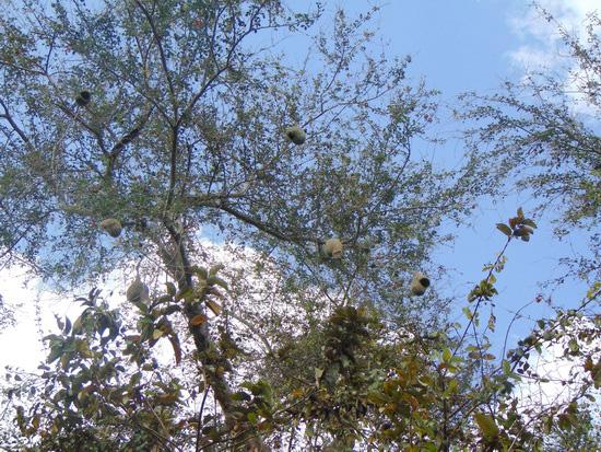 Miền Tây than thứ chim này bỏ đi đâu, ở đây tổ treo lủng lẳng rõ nhiều - Ảnh 7.