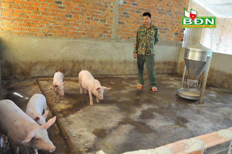 """Đắk Nông: Giá lợn giống """"khét lẹt"""", """"lùng"""" cả tháng mua được 4 con - Ảnh 1."""