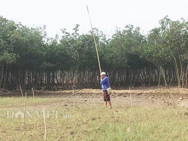 Con cụng là loài gì mà dân ở đây dùng gậy tre dài hơn 3m để bắt? - Ảnh 5.