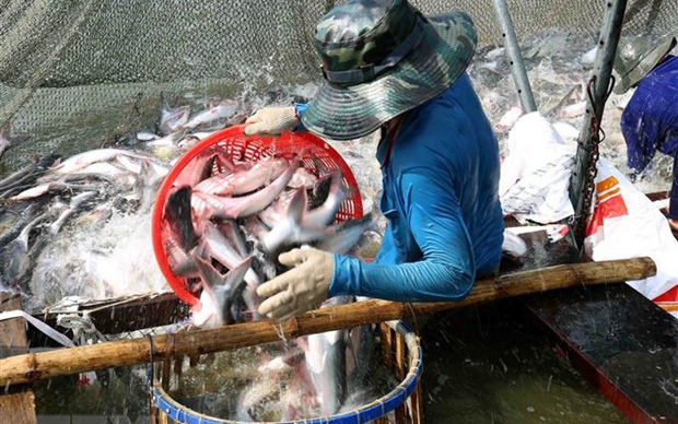 Ngành cá tra có khả năng phục hồi hoàn toàn từ quý 3