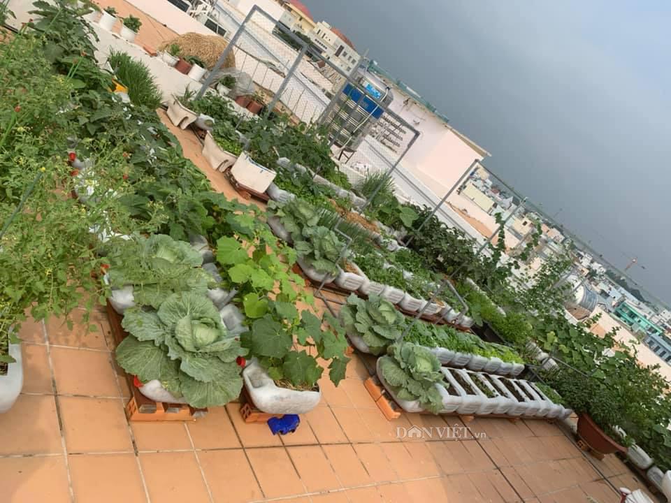 Tận dụng can nhựa mẹ đảm Cần Thơ biến sân thượng thành khu vườn xanh mát - Ảnh 2.