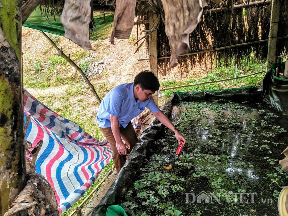 Vua ốc bươu đen xứ Nghệ, mỗi năm thu 500 triệu đồng - Ảnh 3.